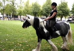 Foto's van Fokpaardendag Sint Anthonis e.o.
