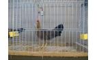 Vereniging Pels en Pluim Kleindieren-manifestatie