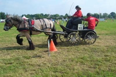 Evenement: 8 en 9 juni Land van Cuijkse Paardendagen te Haps