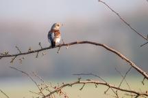 Vogels kijken in natuurgebied Keent